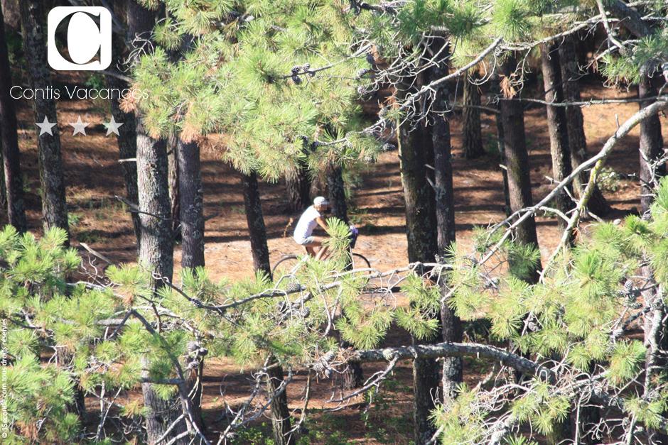 Contis : Les promenades dans la forêt de Contis avant-saison.
